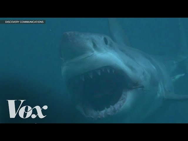 Is Megalodon real? Shark Week debunked
