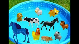 Pool Full of Farm Animals to Learn Colors for Babies