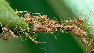 Cách dân gian đuổi kiến diệt kiến không còn 1 con mà không cần xịt thuốc