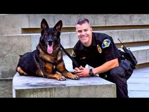 Police Dog Shot in Line of Duty Reunited with Cop | Good Morning America | ABC News