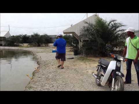 Fishyology - Exotic Fishing Pond, Rawang