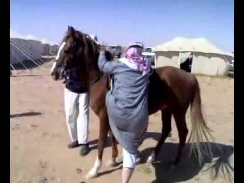 خليجي يركب على حصان.mp4