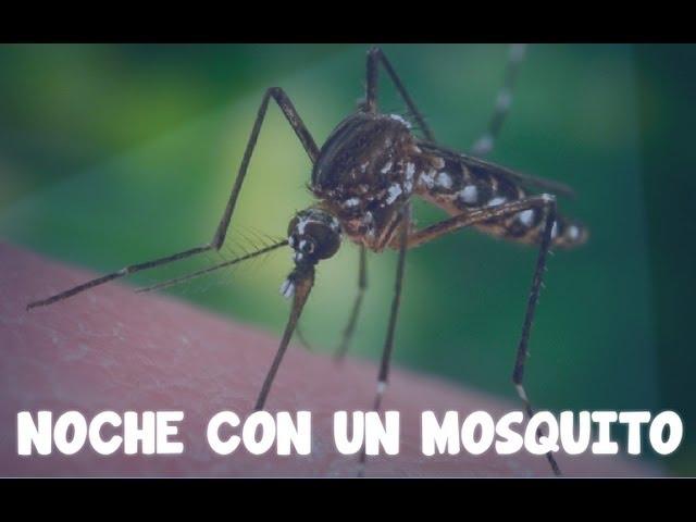 Noche con un mosquito