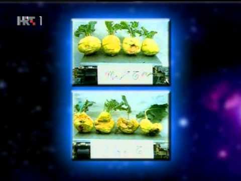 Mjesečev sjetveni kalendar - Biodinamička poljoprivreda
