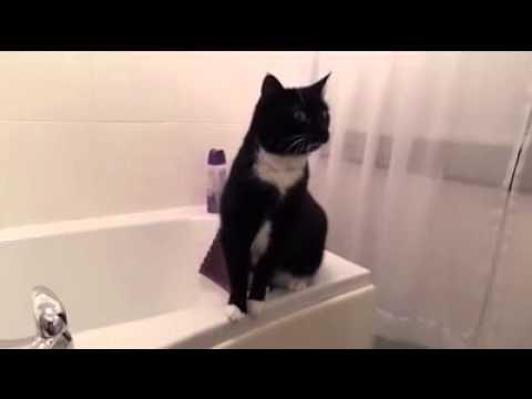 Gatto che si guarda allo specchio youtube - Scimmia che si guarda allo specchio ...