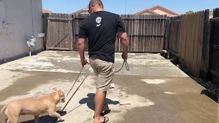 How to teach your dog the leave it command.