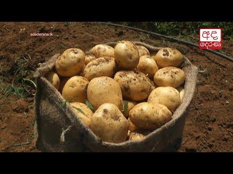 welimada potato farm|eng