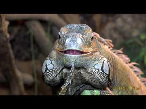 Test Video von Panasonic HC X1  Zoo Augsburg und botanischer Garten