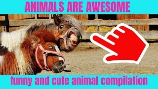 Animals are awesome | funny and cute animal compilation 2019 #2