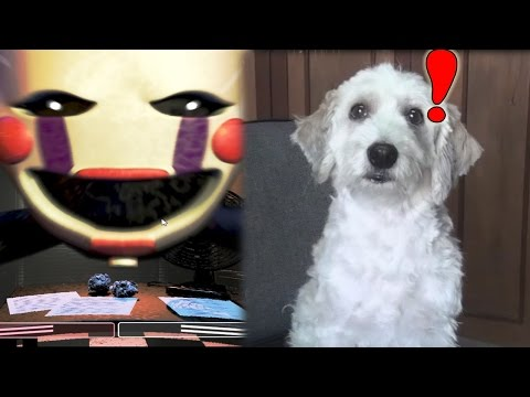 CURLY JUEGA Five Nights at Freddy's 2 | Fernanfloo