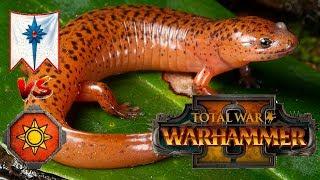 High Elves vs Lizardmen   THE DREADED SALAMANDER - Total War Warhammer 2