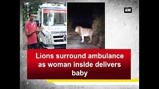 Lions surround ambulance as woman inside delivers baby - Gujarat News