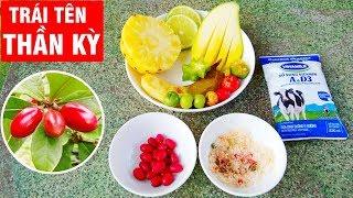 Thu hoạch quả thần kỳ và ăn thử với trái cây có vị chua (harvesting miracle fruit)