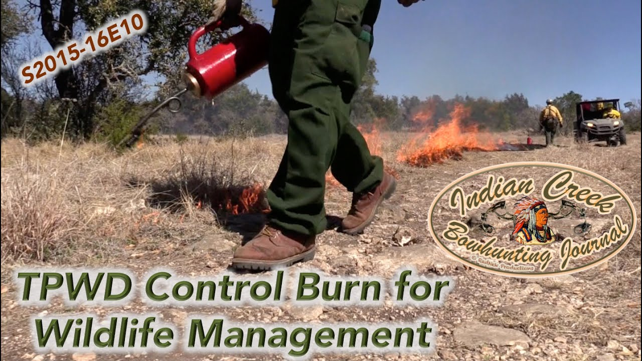 Texas Parks  amp  Wildlife Control Burn for Wildlife Management  Hill Country ICBJ Y2015 16E10