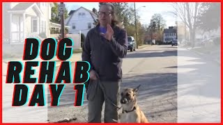 Aggressive, Fearful Dog Rehab Day 1 Solid K9 Training