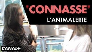 L'Animalerie - Connasse