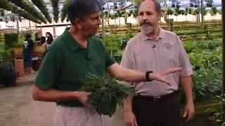 Central Florida Gardening - Ferns for Florida