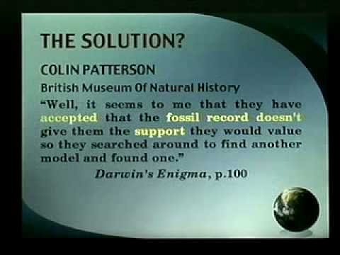 where is the evidence for evolution in the fossil record?? 7-7 Video
