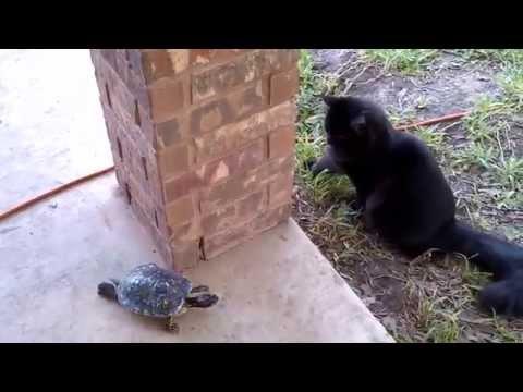 Gato y tortuga Jugando a las cogidas
