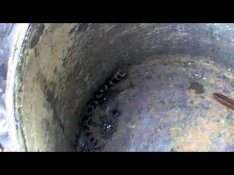 giant snake!  -.-