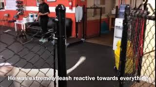 Meet Hank | Reactive Dog | Solid K9 Training Board & Train