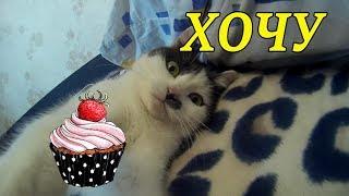 Кошка за Котом...Кошка хочет Кекса