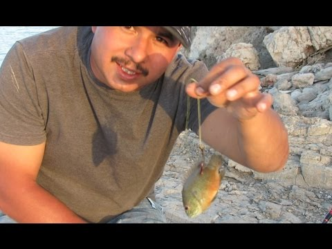 How To Hook Live Bait