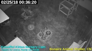 ASB Kittencam Live Stream