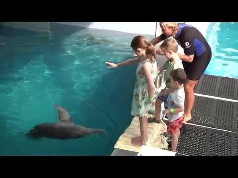 Olivia's wish to meet Winter the dolphin