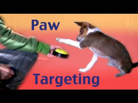 Dog Tricks Tutorial: Paw Targeting