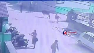 goli kanda   currentnepalnews.com