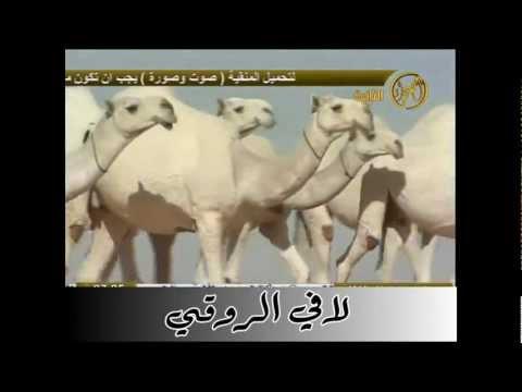 منقية عبدالرحمن آل فاضل المري - وضح - الصحراء