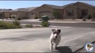 Amazing house dog skills
