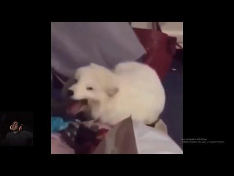 Опит да не се смея с животни 23