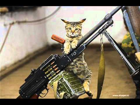 Cats with Guns - YouTube