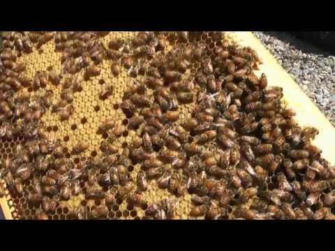 各務原市 「川島養蜂場」 ~蜂の生態~