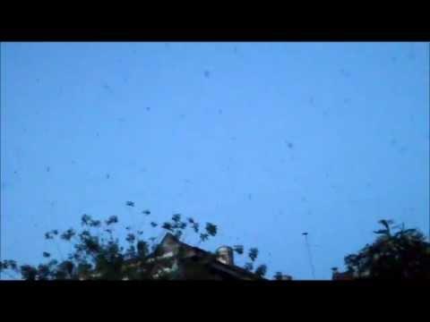 Suara Walet : Mimpi Walet Putih video