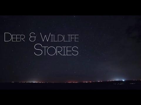 Deer & Wildlife Stories 2015 Teaser