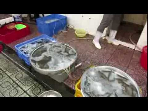 Ben Thanh Fresh Seafood Markets Saigon (Ho Chi Min City) Vietnam 2013