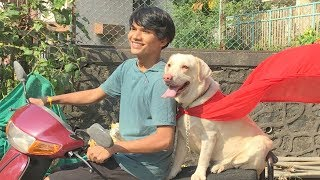 DOG SHORT FILM | HERO POCKET | DIWALI SPECIAL | LABRADOR RETRIEVER || MOHAK MEET