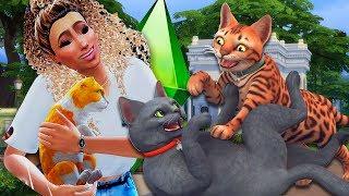 Adotamos TODOS OS GATOS de rua da cidade?! The Sims 4 PETS - Ep06