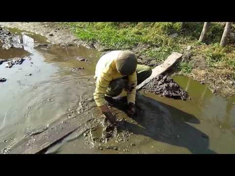 видео ловля рыбы в болотах