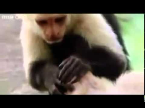 Top Funny Animals (hindi-urdu) Punjabi Totay video