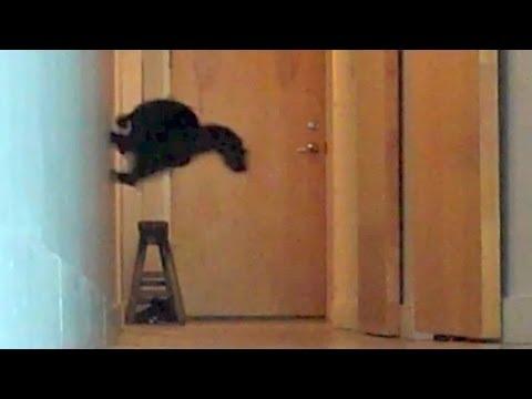 Parkour Cats