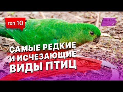 Самые редкие и исчезающие виды птиц... Может ты и не видел таких никогда...