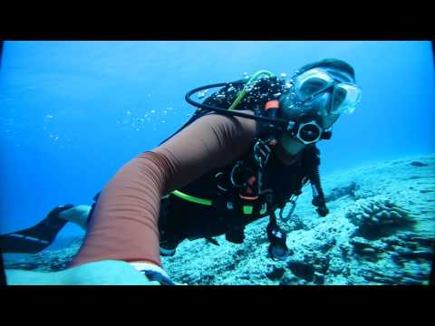 360 VR SCUBA Dive - Oahu Hawaii Koko Crater - Green Sea Turtle