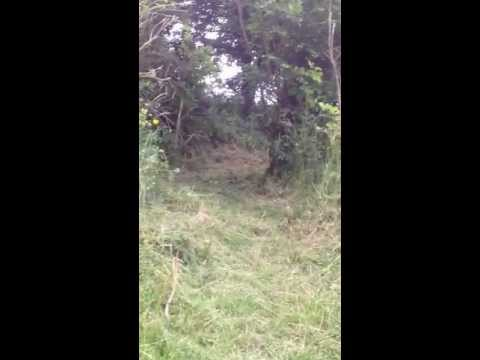 Casually flying out the woods on a bike screaming:)