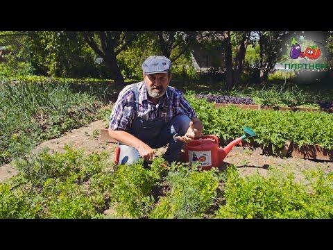 Прореживание моркови – быстрые способы и мои отзывы о них