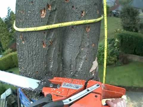 Beech Tree - Negative Rigging