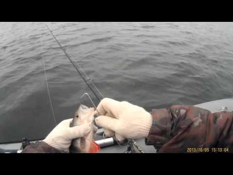 рыбалка на реке белая в июне